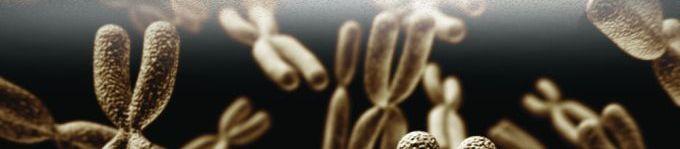 8538-chromosomes