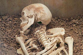 8582-skeleton