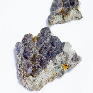 8658-hadrosaur-skin