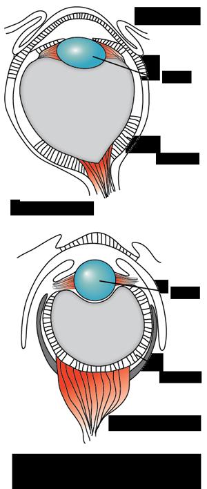 Human-octopus-eye