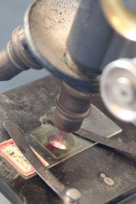 8890-microscope