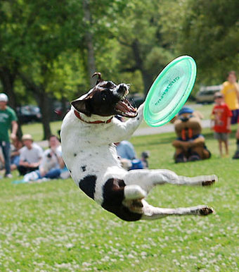 dog-leaping