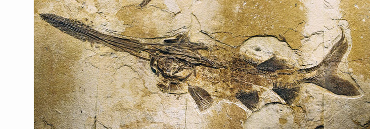 fossil-fish-original-fibres