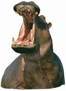 9338-hippo