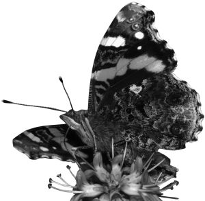 9357-butterfly