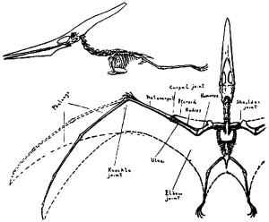 9357-pteranodon