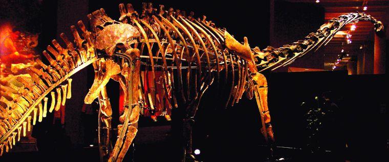 9364-dino-skeleton