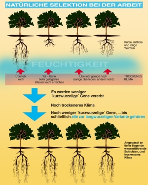 tree roots natural selection diagram