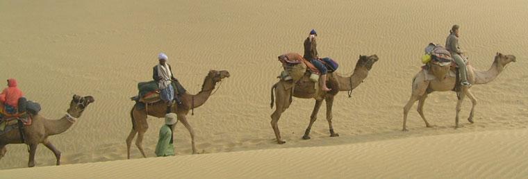 caravan-camels
