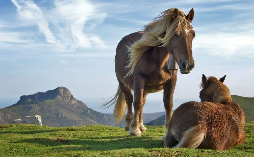 9494-horses