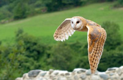 9494-owl