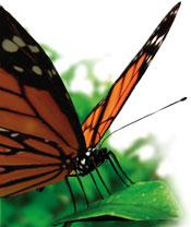 9500-butterfly