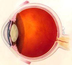 9511-eye