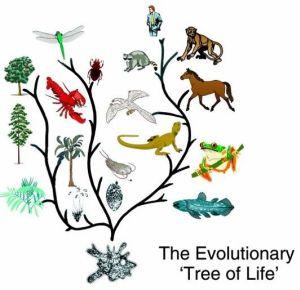 9557-evol-tree