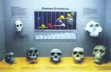 9567human_evolution