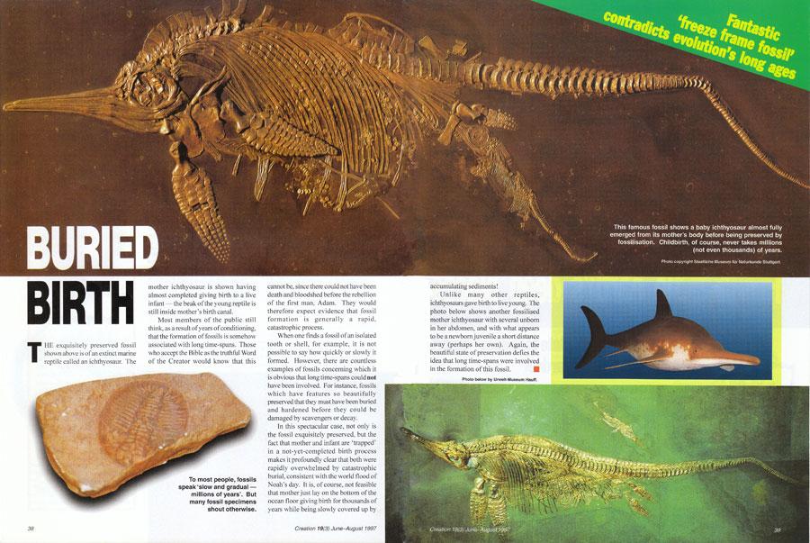 9568-ichthyosaur