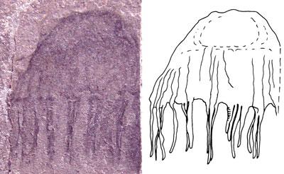 9568-jellyfish