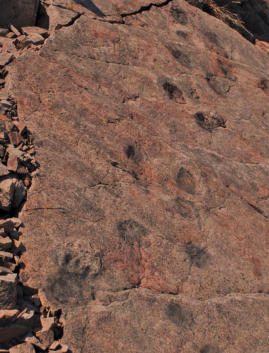 9568-tetrapod-trackway