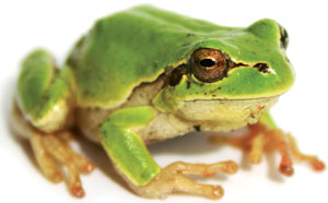 9601frog