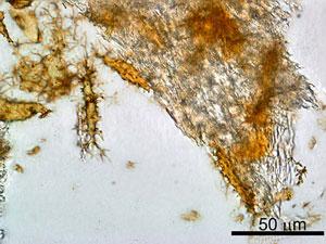 9613-oldest-dino-protein