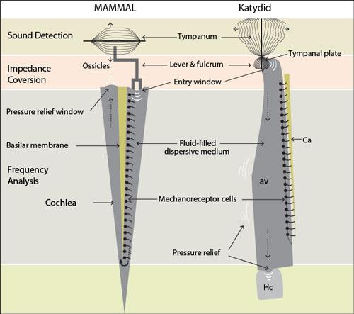 Katydid-graph