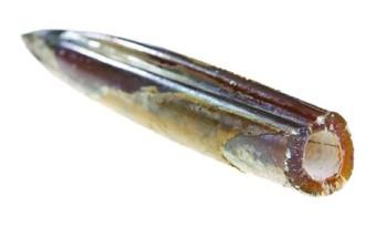 9778-squid
