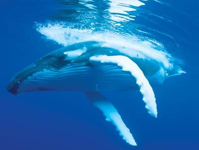 9784-whale