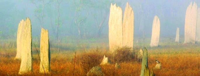 9796-termite-scene-1