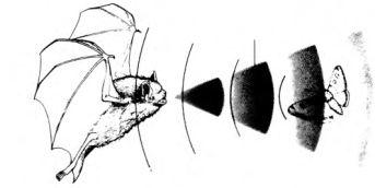 bat-sonar