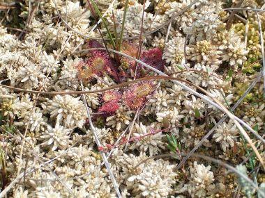 fig-3-sphagnum-moss