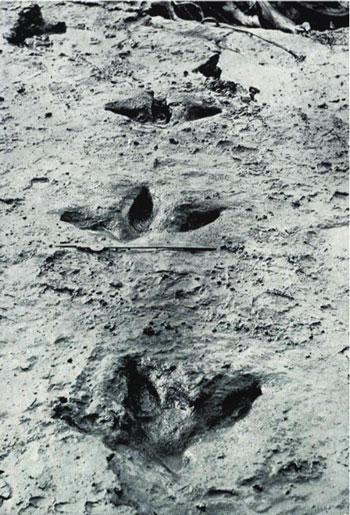 Moa-tracks