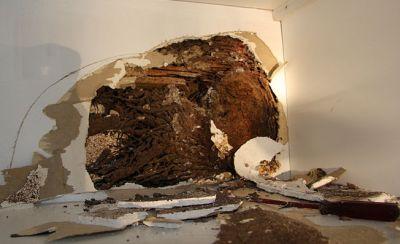 9955-termite-damage
