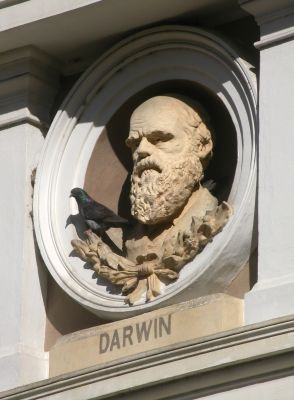 darwin-monument