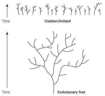Rogue data fell tree of life - creation.com