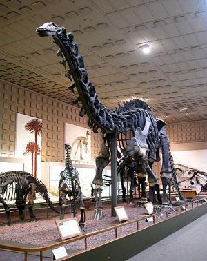 Brontosaurus-excelsus