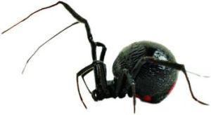 8673-spider