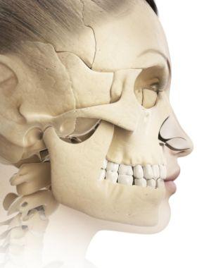 human-jaw