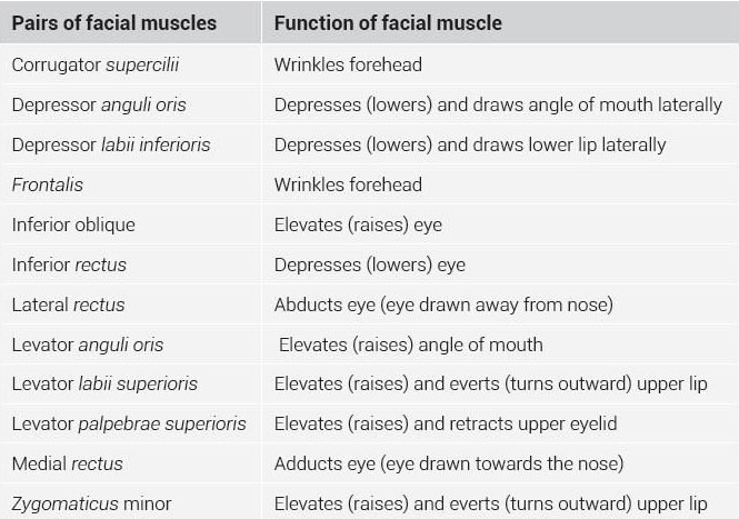 facial-muscles-data