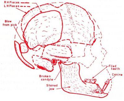 piltdown-skull
