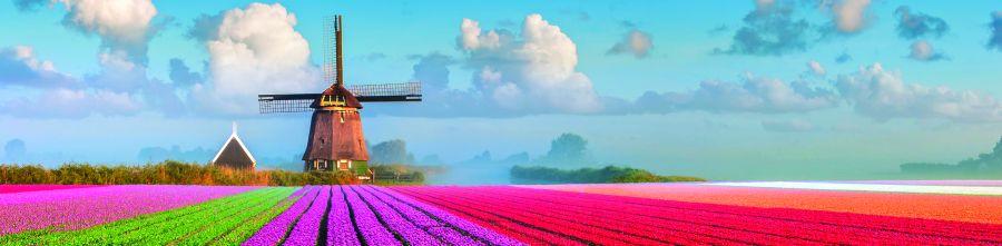 10220-flower-field