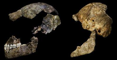 Homo-naledi-skeletal-material