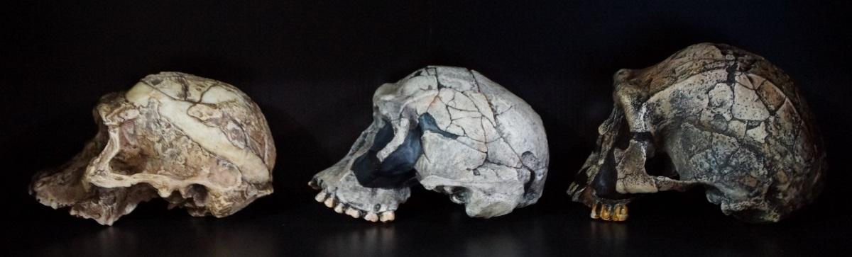 Skull_casts