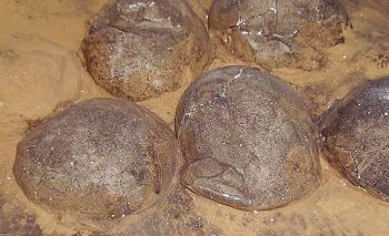 dino-eggs-2