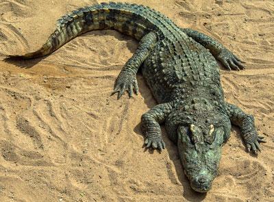 clever-crocs