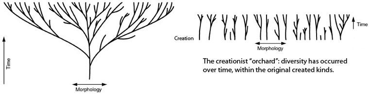 creation-orchird