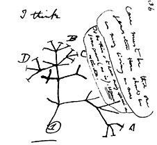 darwin-evolution-sketch