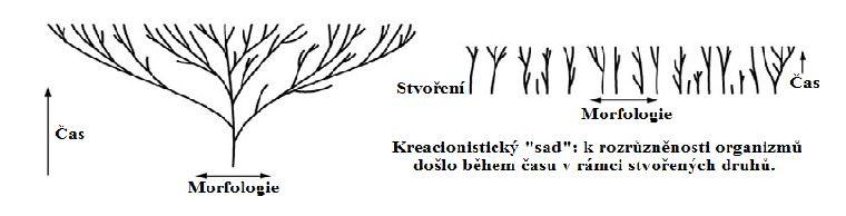 10533-Strom_a_sad_382ivota