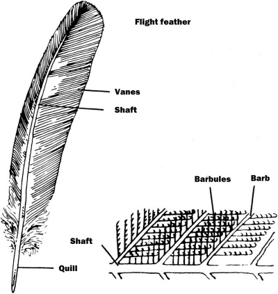 feather_small