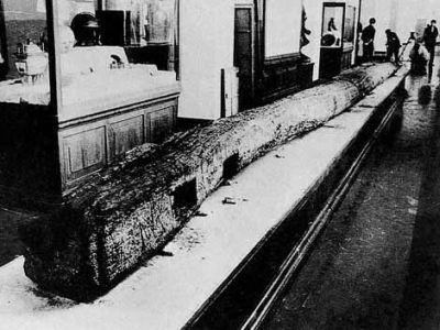 wooden-tiller