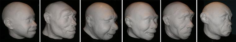 BMNHs-reconstructions